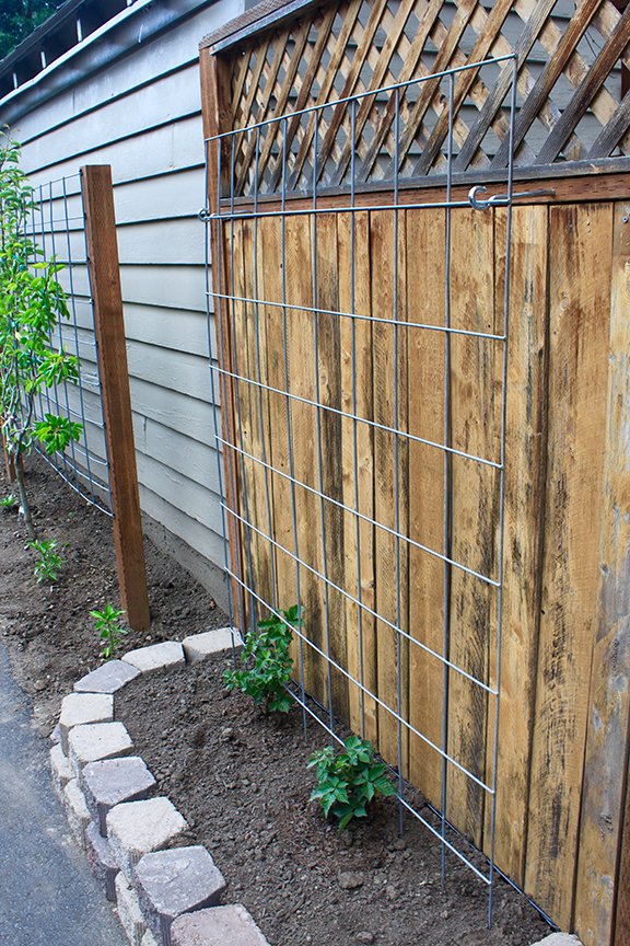 easy garden trellis – fnished