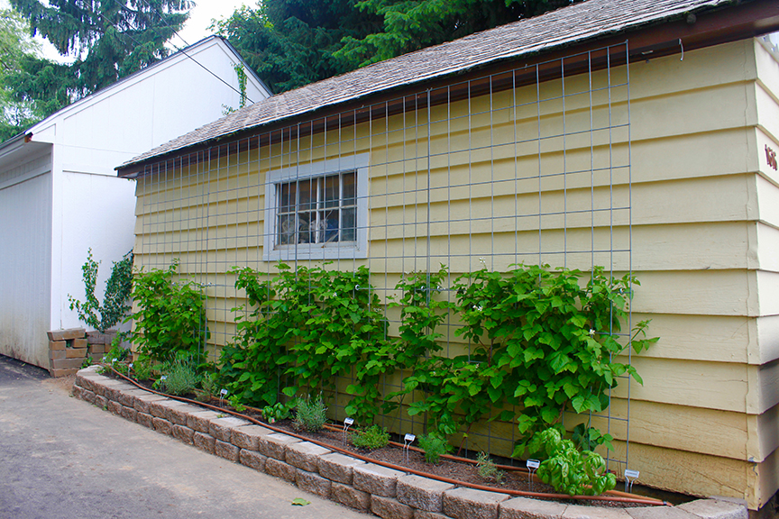 easy garden trellis – garage