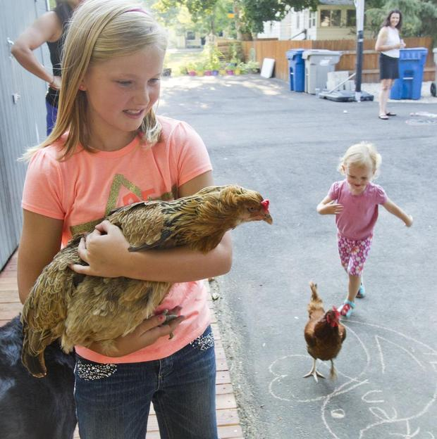 SNOW Block Alley Project – Amelia with chicken