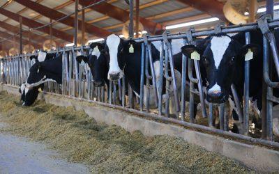 June is Idaho Dairy Month AND Idaho Wine Month